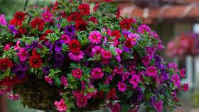 HGTV Home Plant Collection: Flowering beauties at Anderson's in Newport News and nationwide