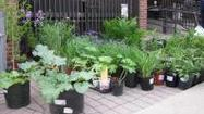 The Gardeners of Central Lake County will hold their annual Plant Sale on Saturday, May 11, 2013 from 8:30 am - 11:00 am at a NEW location, the Crawford Warming House at 815 W. Lake Street Libertyville. The new venue will offer additional indoor space and parking. The sale will be held rain or shine. Arrive early for the best selection!