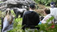 Disney's Animal Kingdom 15 year anniversary quiz answers