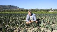 "For many years, Maggie's Farm, based in Agoura Hills, has sold top-quality salad greens and herbs exclusively at farmers markets. <a href=""http://www.kentercanyonfarms.com/"">Kenter Canyon Farms</a> offers a wider range of similar produce, at a few farmers markets, but mostly wholesale and on a much larger scale. Many shoppers know that the two farms are owned by members of the same family, but few realize that they offer two versions, boutique and commercial, of production that now comes mostly from the same land."