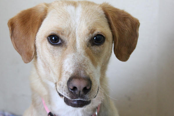 Daffodil is available for adoption.
