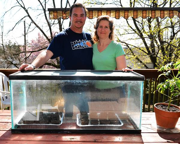 Steve Allen and Carole Ondrovic used an old fish tank to make a greenhouse.