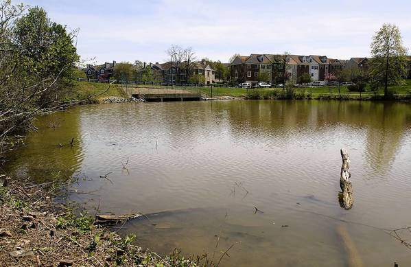 The lack of dredging of the smaller of the two Laurel Lakes has allowed the lake to fill with sediment and become overgrown.
