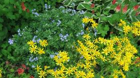 Virginia Native Plant Society: Plant sale Saturday, plant walk Sunday ... courtesy John Clayton Chapter