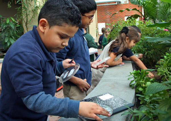 First-graders at Hartford's Mary Hooker Environmental Sciences Magnet School recently collected and counted pill bugs as they learn about insects and life cycles.