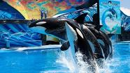 SeaWorld, the parent company of Busch Gardens Williamsburg and Water Country USA, saw its stock rise 19.6 percent in its first day as a publicly traded company.