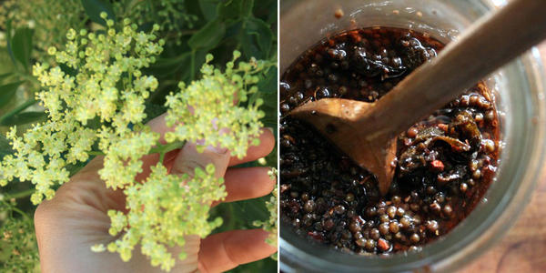 Foraging for elderflowers will be part of Wildcraft Apothecary's first class.