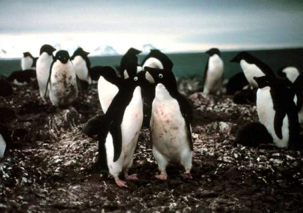 Ever wondered about your inner penguin? Then there's a quiz you'll want to take.