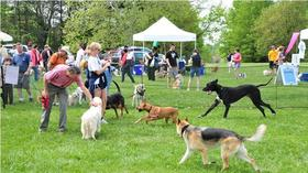 Dog Day Afternoon, this Saturday in Columbia