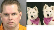 A canine con man was busted Wednesday after trying to extort an $8,000 cash ransom from a North Naples woman in exchange for her two white 3-year-old Samoyeds, Ava and Snowdot, according to a news release from the Collier County Sheriff's Office.