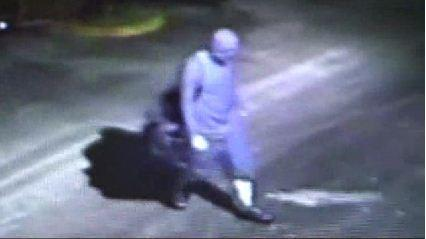 Davie Police are searching for a burglar who broke into Motorcycle World