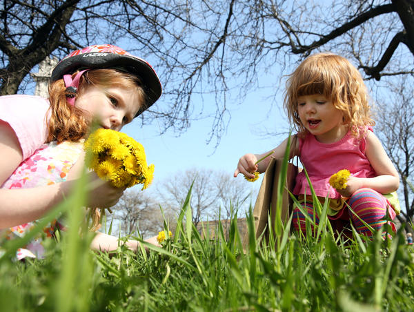 Evelyn (left) and Fiona McDonough, 5 and 2 respectively, gather dandelions in Logan Square Saturday.