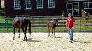 College junior Steve Moirano has no children of his own, but he played the proud parent Saturday as a pair of foals debuted to a crowd of onlookers at the University of Maryland campus farm.