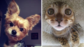 Baltimore's Cutest Pet Contest finalists [Pictures]