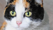 Our highlighted pets this week are Kitty and Sundance. Kitty is a pretty, 2-year-old calico cat. Kitty was abandoned by her owner who moved and left her behind.  Luckily, a kind neighbor rescued Kitty and brought her to the humane society so she would be safe until she finds her new forever home. Kitty enjoys her afternoon naps and having her head petted. She is sweet and affectionate and will make a wonderful companion.
