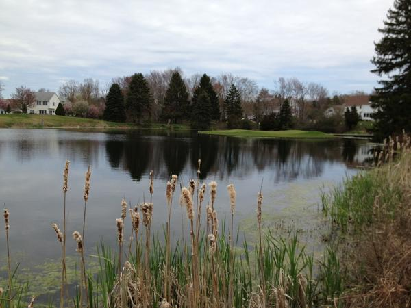 The famous island hole at Minnechaug Golf Course.