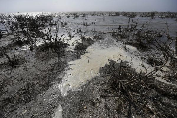 In an April photo, slowly eroding oil residue is seen among dead mangrove at Cat Island in Plaquemines Parish, La.