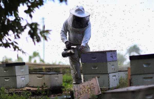 A Florida beekeeper collects honey from his hives. A variety of factors have contributed to a worrisome loss of bee colonies in recent years, and a federal report released Thursday concludes there is no single remedy.