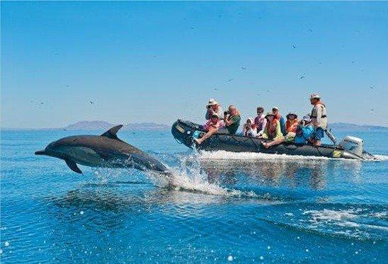 Trip participants track dolphins from a Zodiac boat in Mexico's Sea of Cortez.