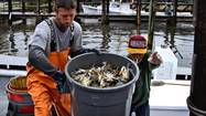 Michael Diggs of Poquoson has been a waterman for more than 40 years, and says the blue crab harvest as the 2013 season kicks in is slim pickings.