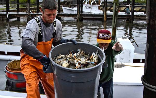 Crew members David Follett and Larry Haney unload a day's catch at the Newport News small boat harbor.
