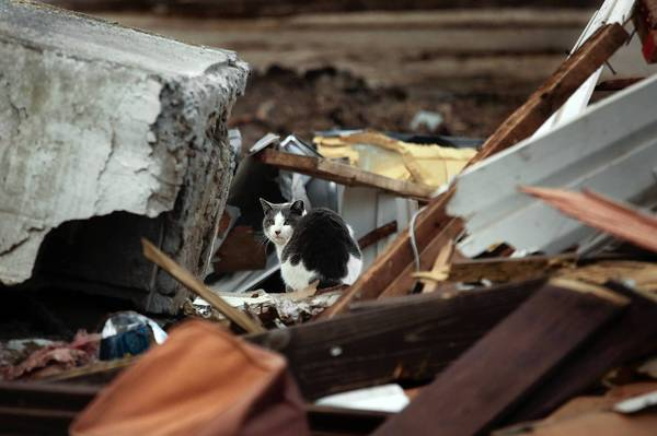 A cat explores the rubble of a home damaged by Superstorm Sandy in October in the New Dorp area of Staten Island. A volunteer aid center has been told to leave a park, but many victims living in temporary housing say they still need its help.