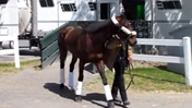 Kentucky Derby winner Orb arrives at Belmont [Video]