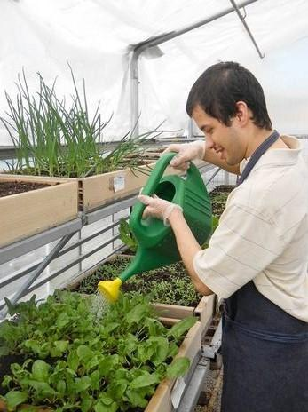 Miner School student Ernesto Ocampo, 19, waters the spinach growing in the NSSEO school's greenhouse, which was refurbished with a $5,000 grant.