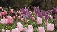 Daily Deal: Free flower sniffing on National Public Gardens Day