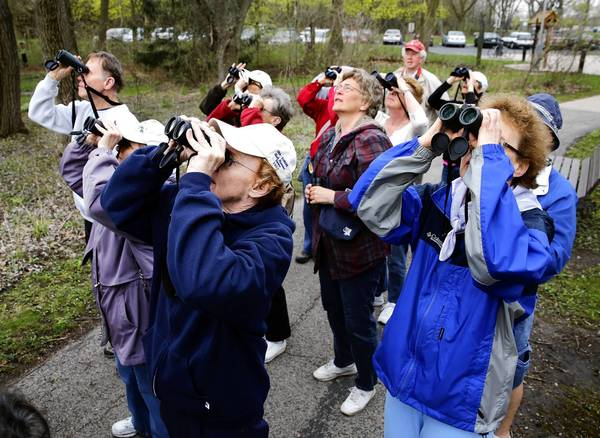 Birders aim their binoculars at high branches to watch warblers during a walk at Willowbrook Wildlife Center in Glen Ellyn.