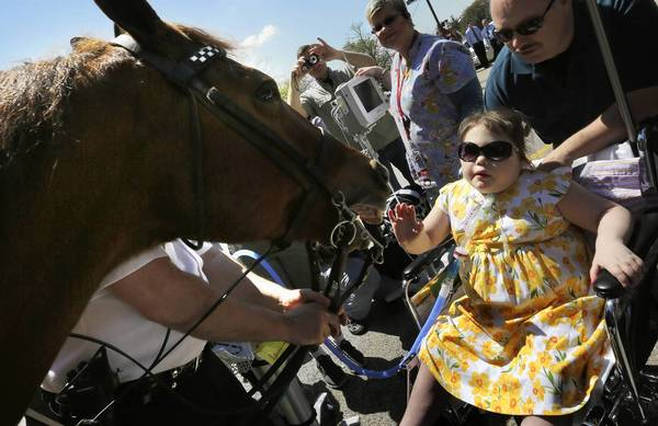 "Kira Mammoser, 9, with her father, Chuck Mammoser, right, reaches out to pet police horse ""Mahoney"" outside Advocate Children's hospital in Park Ridge, on Wednesday. Kira, who has a rare disease, was surrounded by family and staff outside the hospital as she was granted her wish to see horses. Two Chicago Police horses were brought to the hospital."