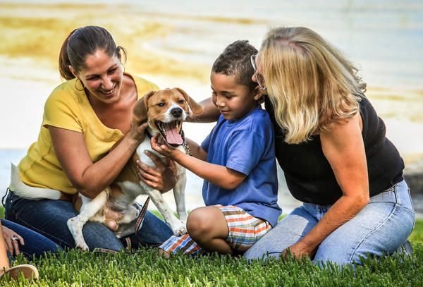 Rufus, the beagle is reunited with his family Nicole West, Chazz Hornbuckle, and Penny Dejulia on Thursday May 09, 2013 in Belle Isle, Fla. (Joshua C. Cruey/Orlando Sentinel)