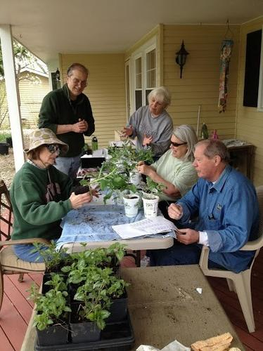Gardeners of Central Lake County getting perennial plants ready for Annual Plant Sale Sat. May 11 at Crawford Warming House 817 W. Lake Street Libertyville  from 8:30 am - 11:00 am