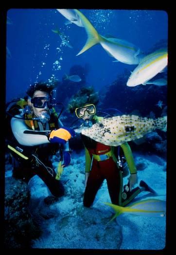 John Pennekamp Park, Divers