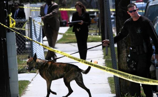 A police dog and handler look for evdence in front of an apartment building where three people were killed.