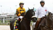 An eighth Preakness starter has been named, and he will bring jockey Rosie Napravnik back to the state where her career began to ride for the first time in its premier race.