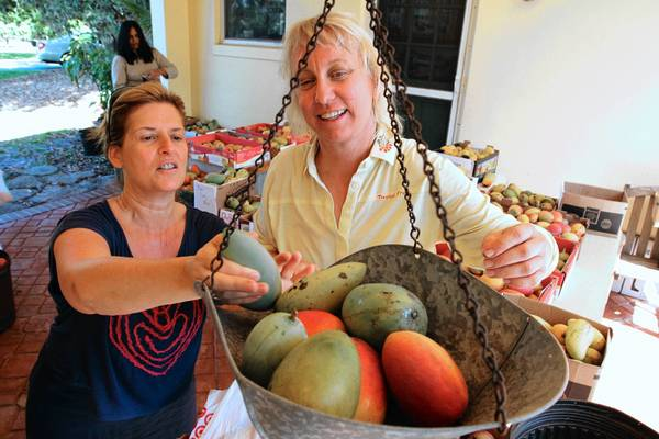 Chris Wenzel (right) helps costumer Beth Kleinman, of Delray Beach, weigh mangos at Truly Tropical farm in Delay Beach. Wenzel sells fruit from her 5-acre mango farm in Delray Beach featuring more than 50 varieties of mangoes and other rare tropical fruit such as sapodilla and jak fruit.