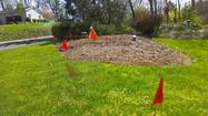 Judy and Joe Kaminski hired a landscaper to plant trees in their yard to replace trees that died during recent storms.