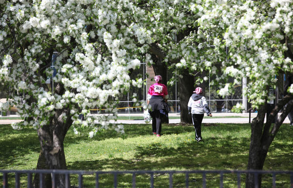 Race participants walk through trees blossoming in Grant Park Sunday, following the Race for the Cure on Mothers' Day which honored former First Lady Maggie Daley in Grant Park in Chicago. The weather for the race was in the 50s, but it was sunny.