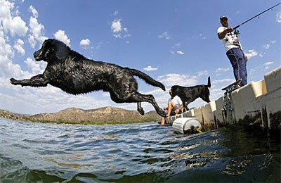 Joe D'Alfio's black Labrador takes a flying leap into the cool water of Vale Lake near Temecula as the early afternoon temperature peaks at 102 degrees Monday.