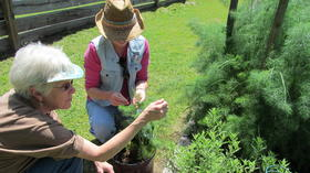 Master gardener training: May 31 is deadline to register for fall classes on the Peninsula