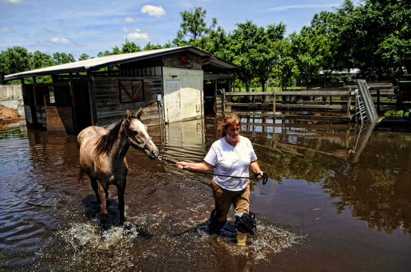 Tropical Storm Isaac's historic drenched central and western Palm Beach County, leading to flooding in Wellington and Loxahatchee. Jennifer Swanson of Pure Thoughts Horse Rescue in August led one of her 43 horses to a trailer for transport to dry quarters in Wellington. The Pure Thoughts property in The Acreage flooded heavily during Isaac.