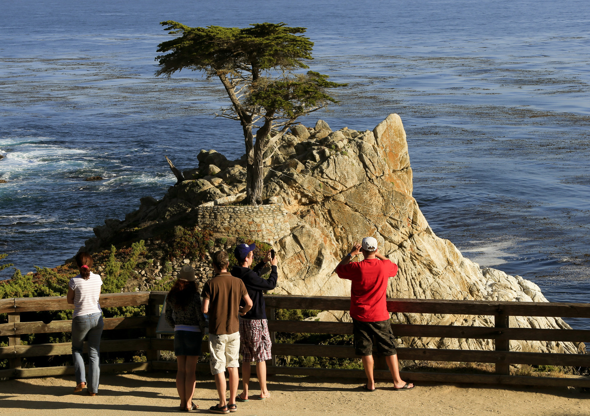 The Lone Cypress   This lone cypress, standing on a rock