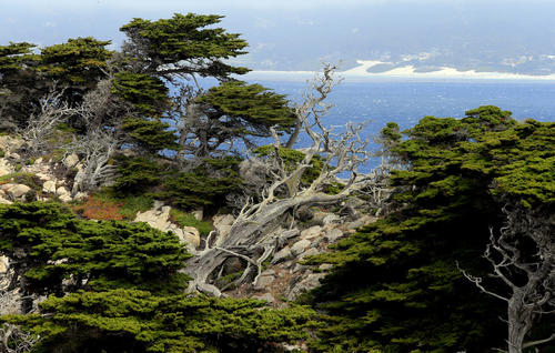 Groves of Monterey Cypress cover the rocky shoreline at Point Lobos State Reserve, three miles south of Carmel. Admission to the reserve is $10 a car. Many visitors dodge that cost by parking along Highway 1 and walking in.