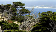Point Lobos State Natural Reserve near Carmel, Calif.
