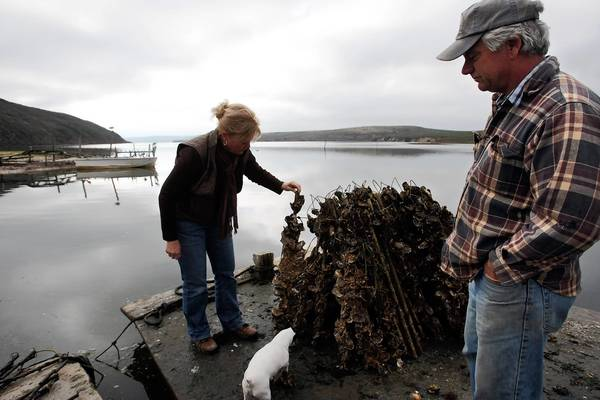 Shown in 2009, Kevin Lunny, owner of Drakes Bay Oyster Co., right, looks down from a barge as his sister Ginny Cummings views oyster sticks that have been harvested at the oyster farm in the Point Reyes National Seashore.