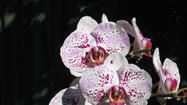 Orchid Care Is Easy