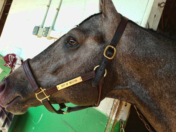 """fl-city-of-weston-horse - A horse named """"City of Weston"""" is racing this weekend in supporting race at the Preakness. Handout photo provided by:"""