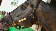 Family's thoroughbred City of Weston to race Saturday at Pimlico in Baltimore