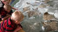 The surprise isn't that the Shedd Aquarium now has an exhibit where visitors can touch stingrays as they glide by, but rather that the most popular aquarium in the U.S. hasn't had one before now.
